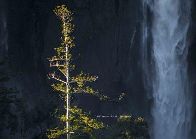 Blencoe Falls (3)