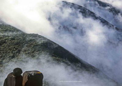 Daintree Wilderness (4)