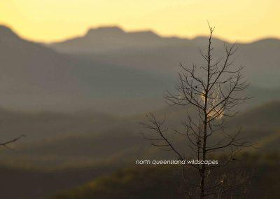 Daintree Wilderness (5)