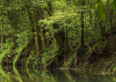 Daintree Wilderness (6)