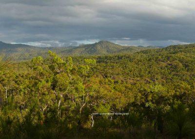 Danbulla Forest Scenes (1)