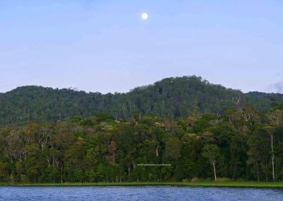 Danbulla Forest Scenes (2)