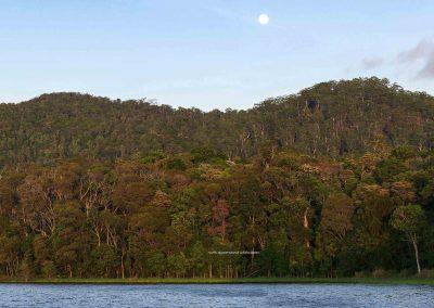 Danbulla Forest Scenes (3)