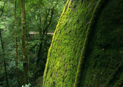 Danbulla Forest Scenes (5)