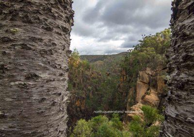 Hoop Pine Gorge 2
