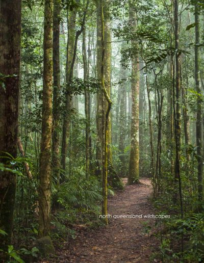 Paluma Forest Trail