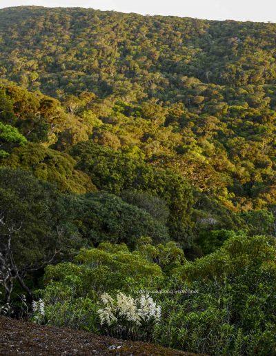 Mt Lewis Scenery 3