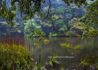 Rainforest Backwater