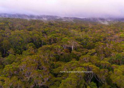 Rainforest Canopies (1)