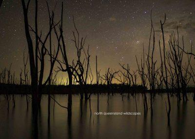 Tinaroo Night Forest