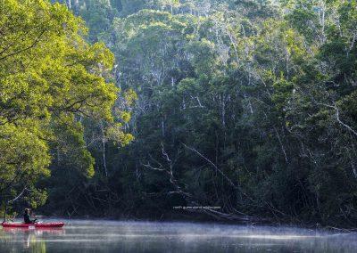 Wet Tropics Dawn (2)