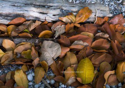 Beach Leaves