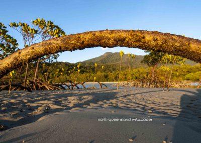 Daintree Coast 2
