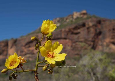 Flowers (12)Kapok