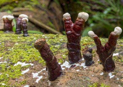 Funghi (3)