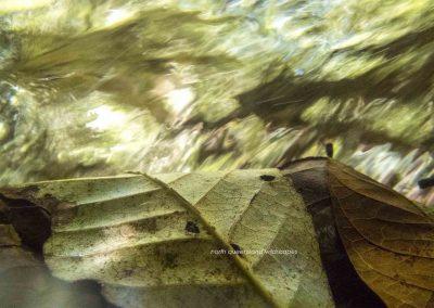 Leaves (2) Underwater