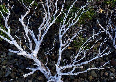 Mangroves (2)