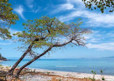Pelorus-Island-(2)