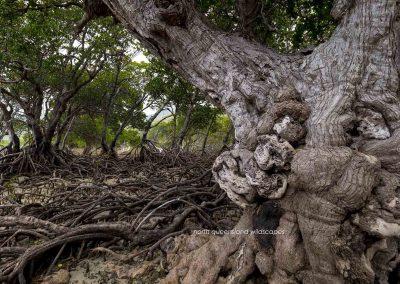 The Mangrove Coast (1)