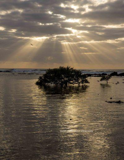 The Mangrove Coast (2)