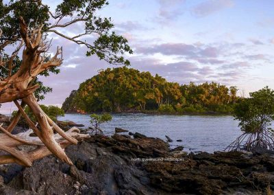 The Mangrove Coast (4)