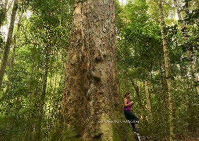 Trees (13) Acacia Cedar